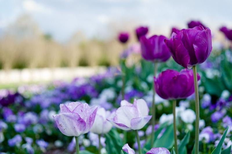 садовые цветы каталог с