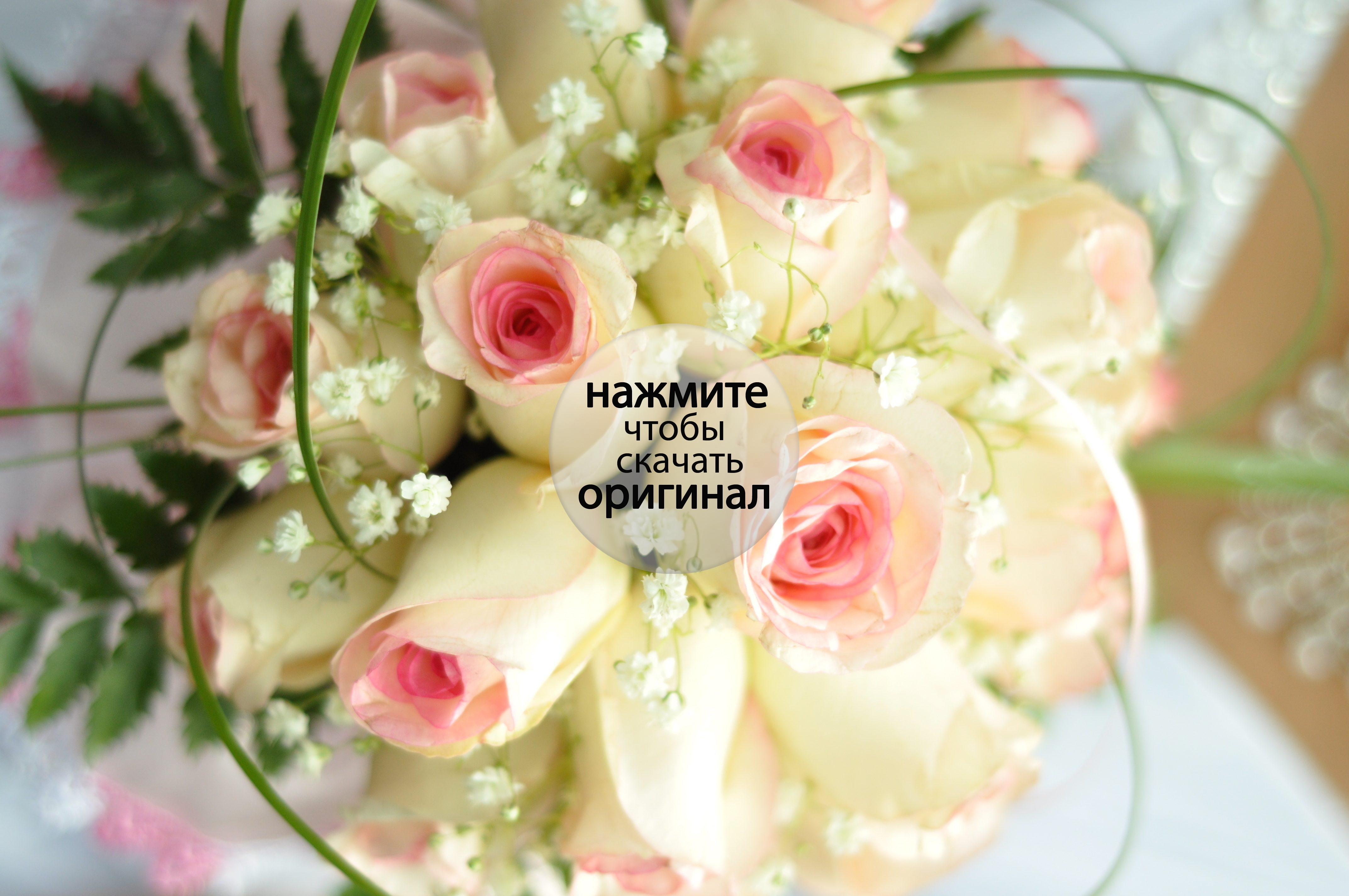 Бежевые цветы