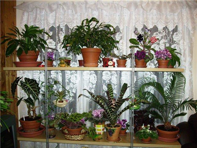 Каталог комнатный цветок 98