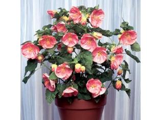 Каталог комнатный цветок 58