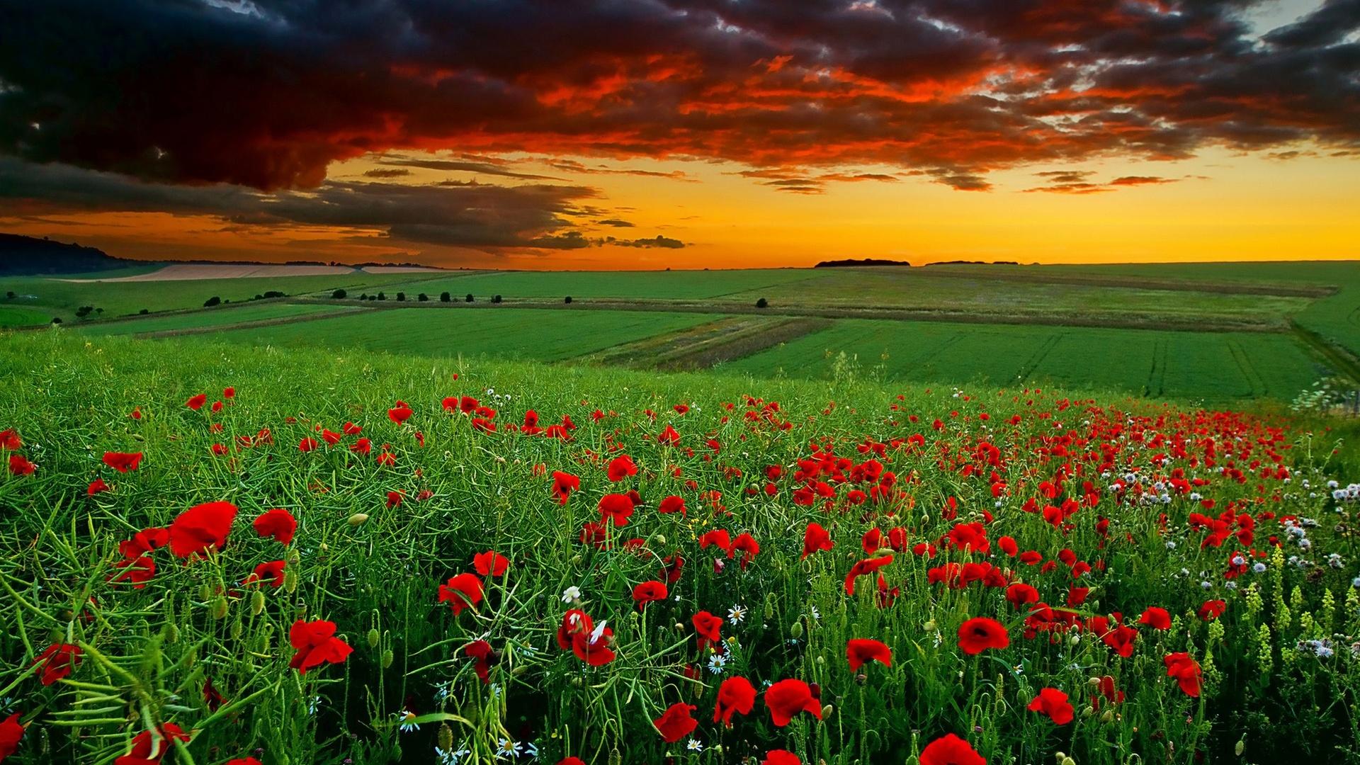 Фото полей с цветами