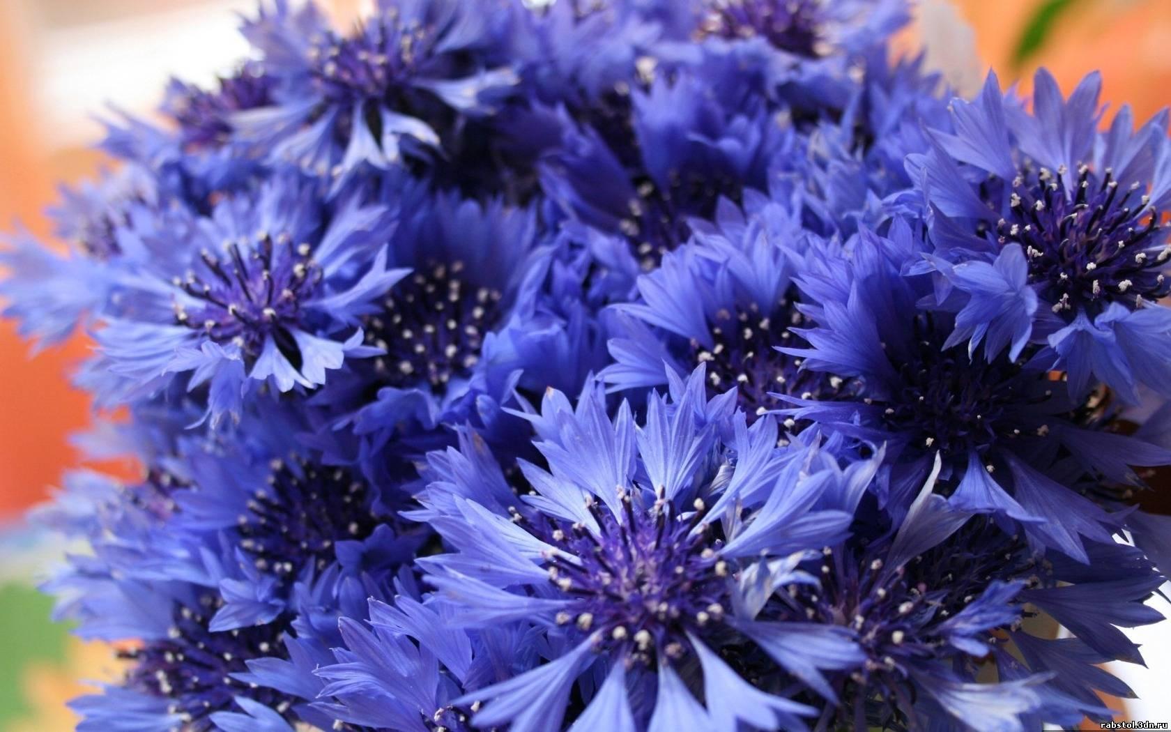 Картинки синие мокасины - 74