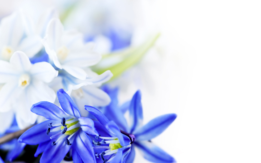 Картинки синие с белым - 9
