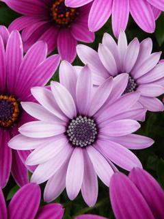 фото цветов на телефон скачать