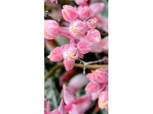 Цветы на телефон картинки бесплатно