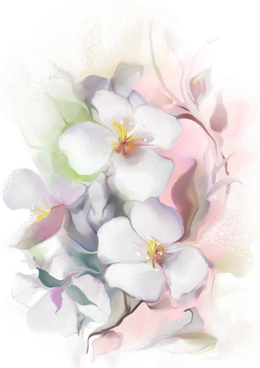 Жасмин рисунок цветок
