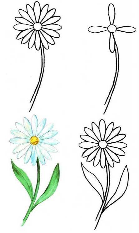 Полевые цветы схема рисования
