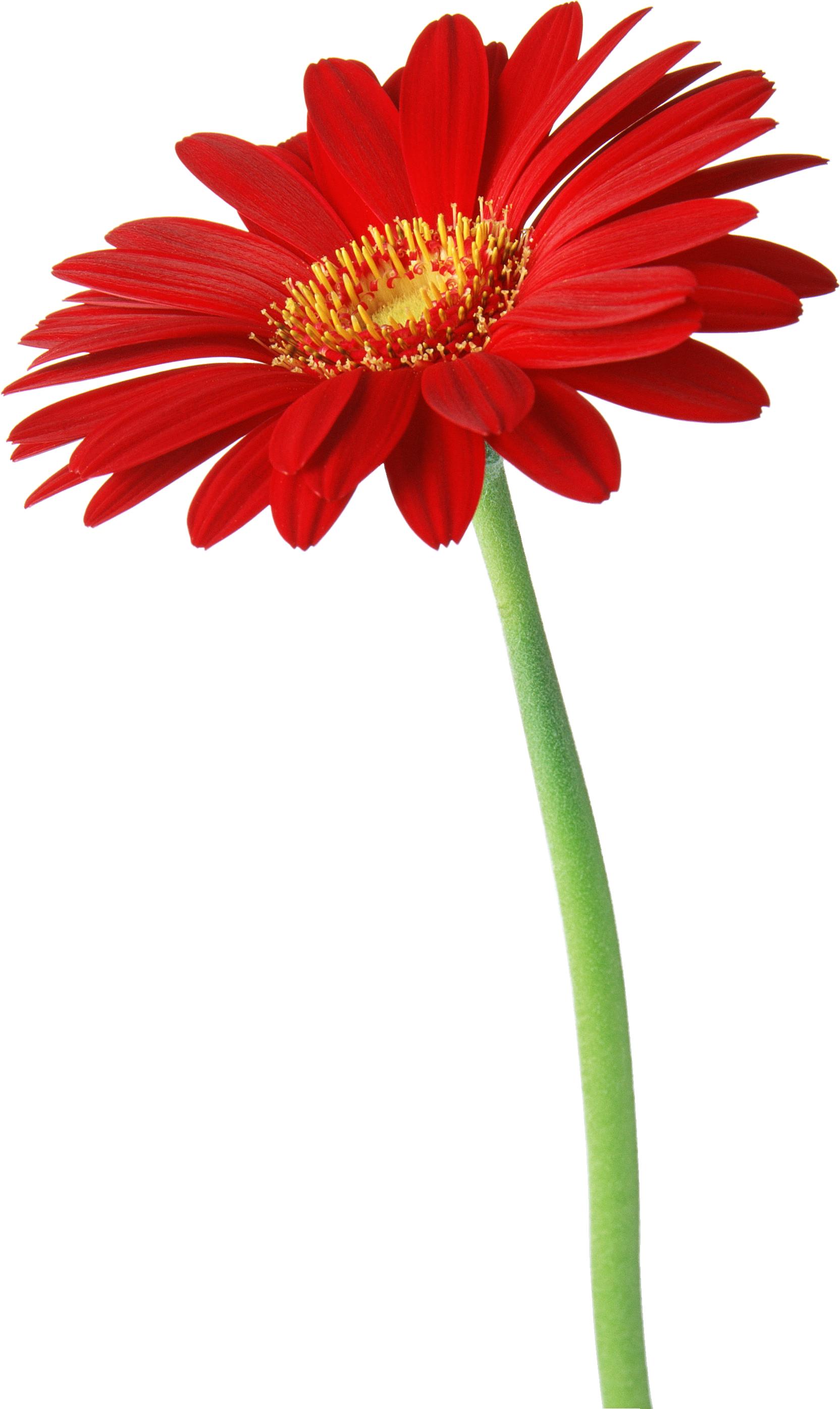 Красивый цветочек фото