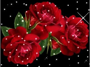 цветы движущиеся картинки