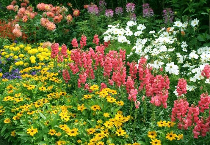 Схема как посадить цветы 631