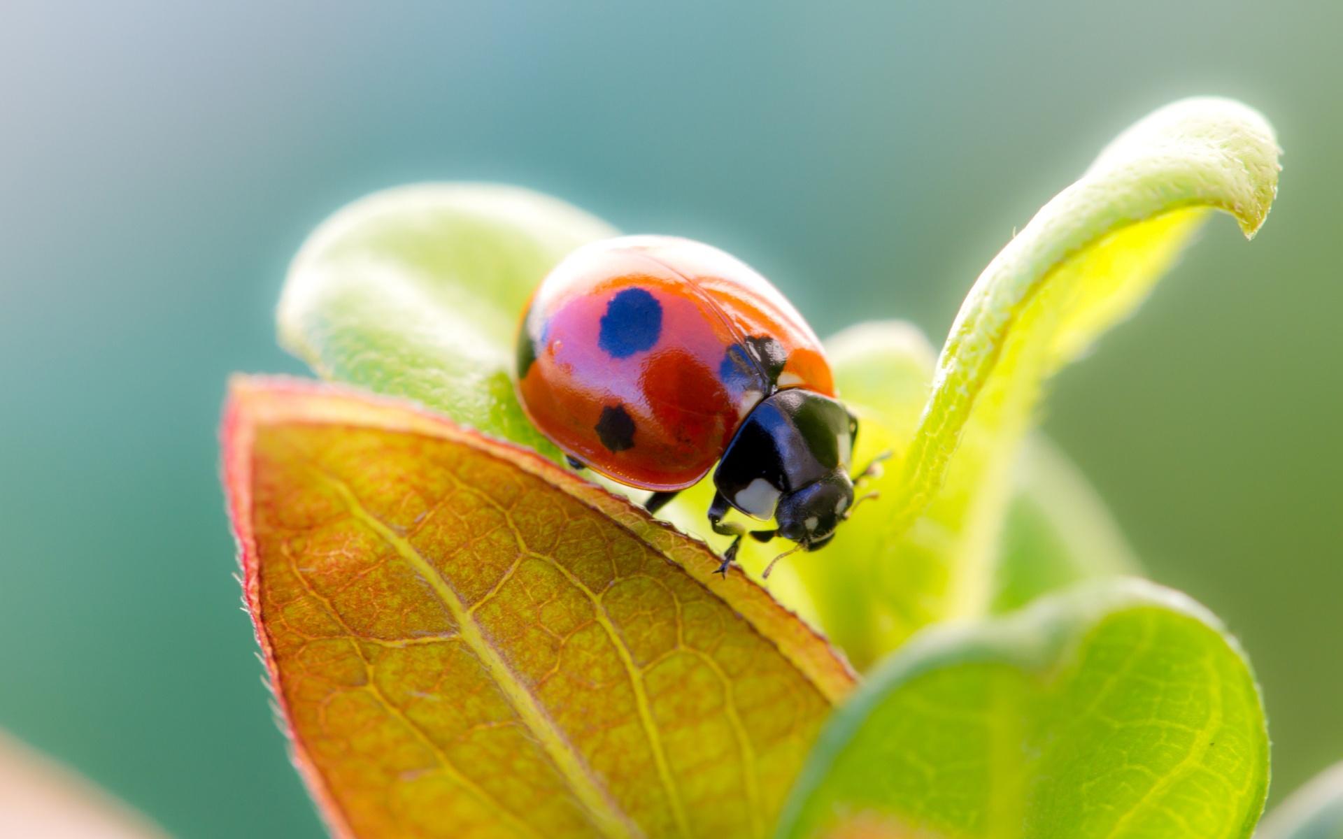 Ladybugs on flowers wallpaper