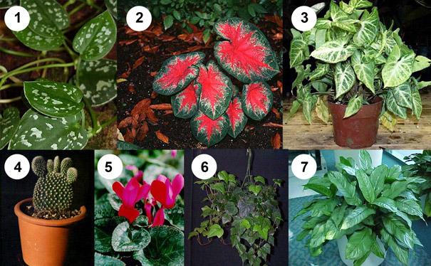 Комнатные растения и уход за ними ядовитые