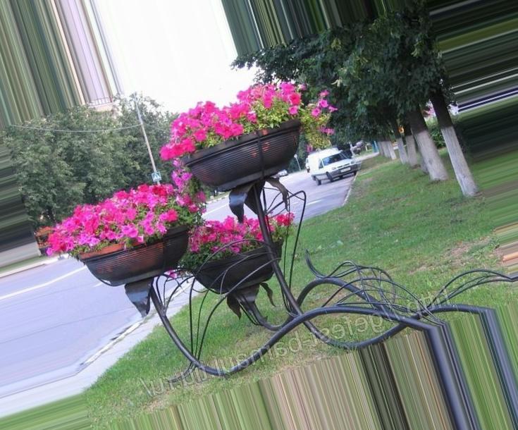 Фото многолетних цветов уличных
