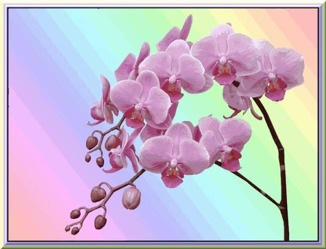 Скачать на телефон букеты цветов