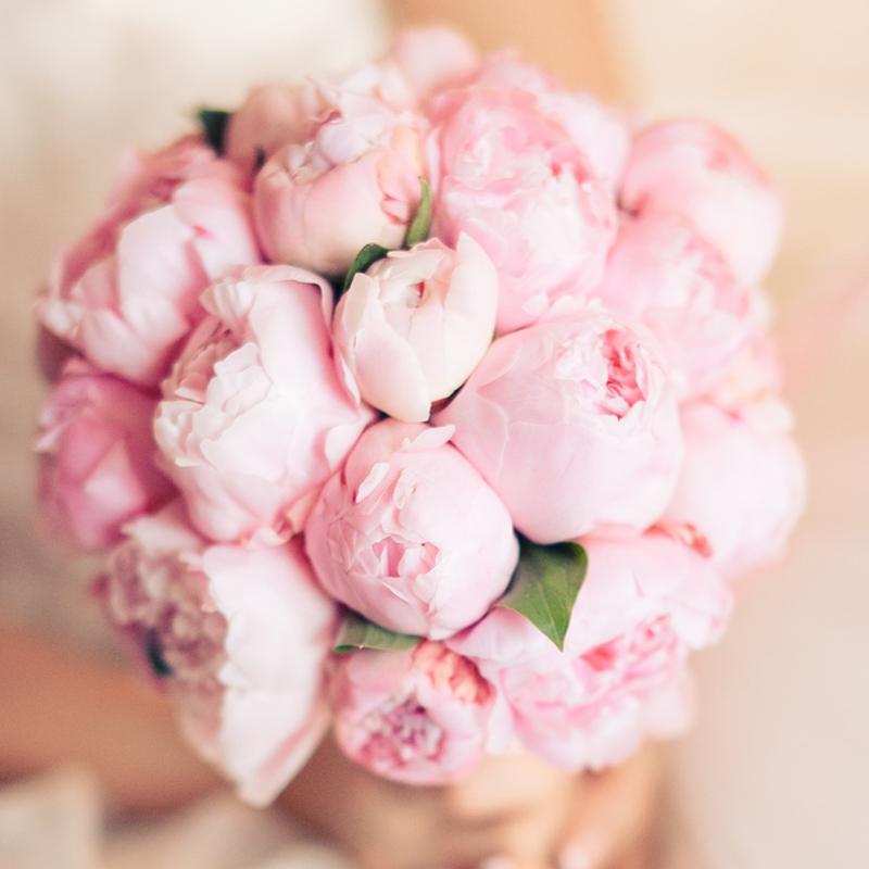 Цветы красивые нежные фото