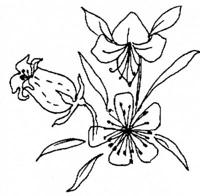 картинки для выжигания цветы
