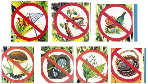 Экологические картинки природы для детей