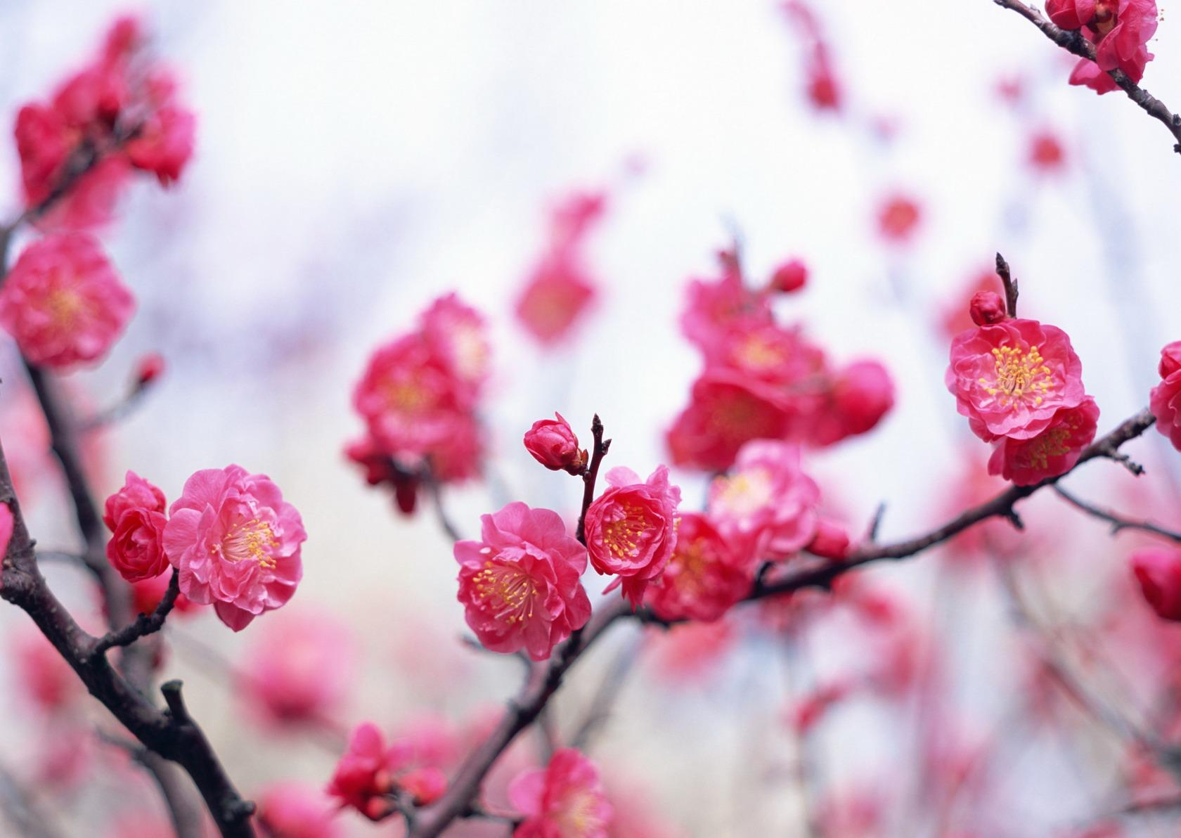 картинки для рабочего стола цветы: