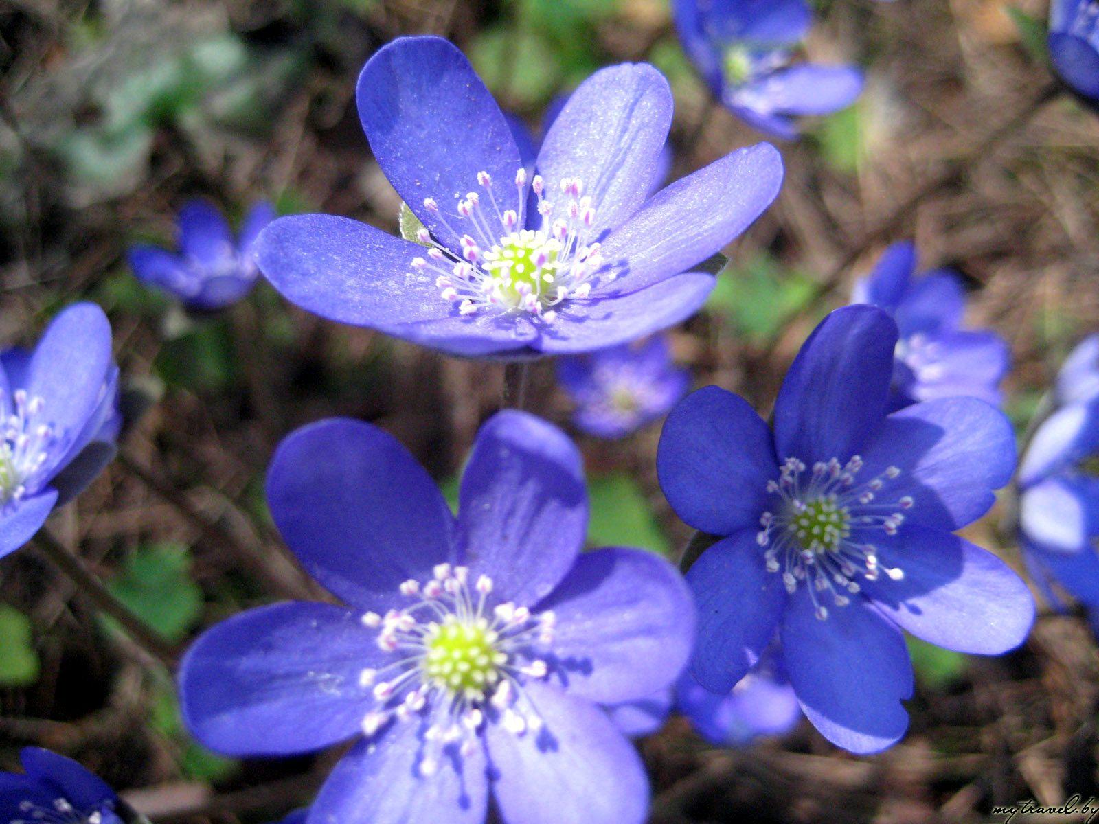 Картинки цветы и природа в хорошем качестве