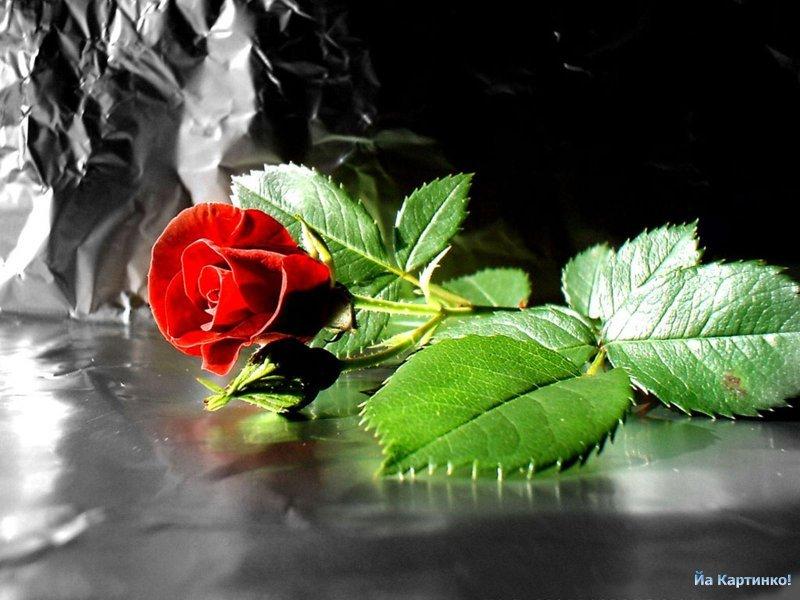 Картинки красивые цветы - 2