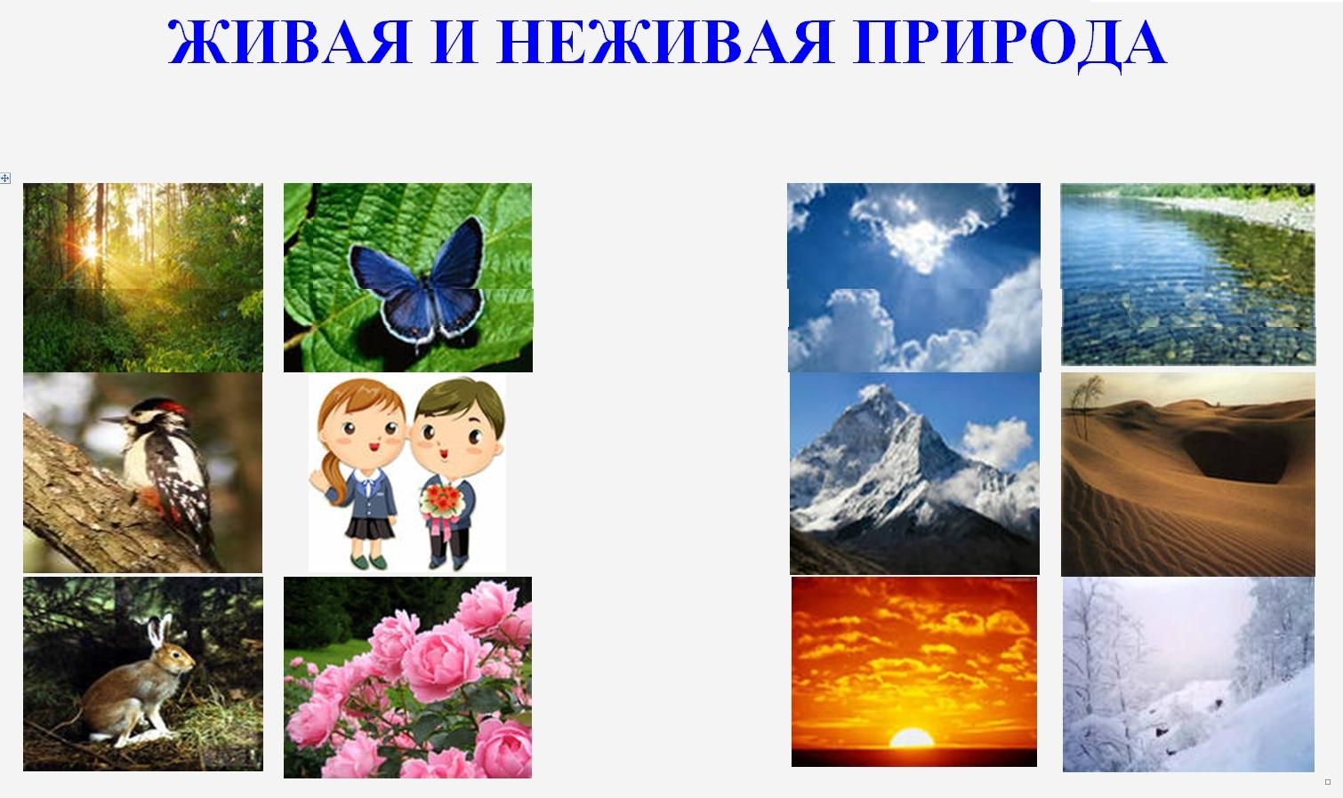 Живая и неживая природа для детей картинки с 13