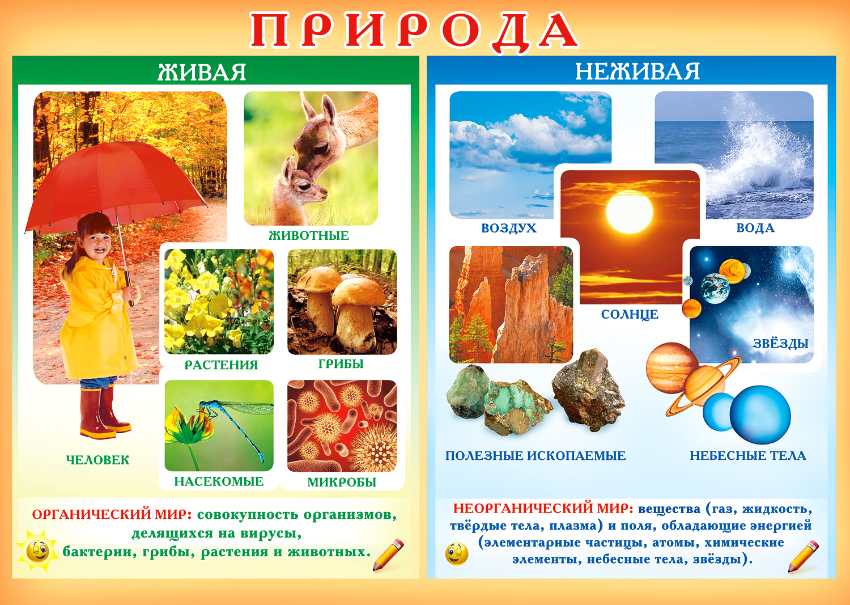Живая и неживая природа для детей картинки с 18