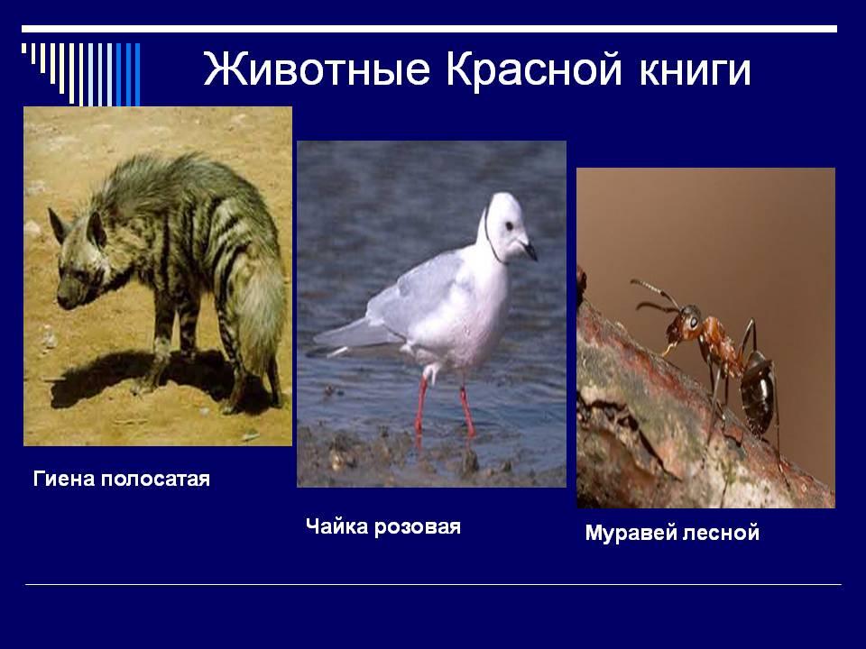 Растения и животные красной книги россии скачать