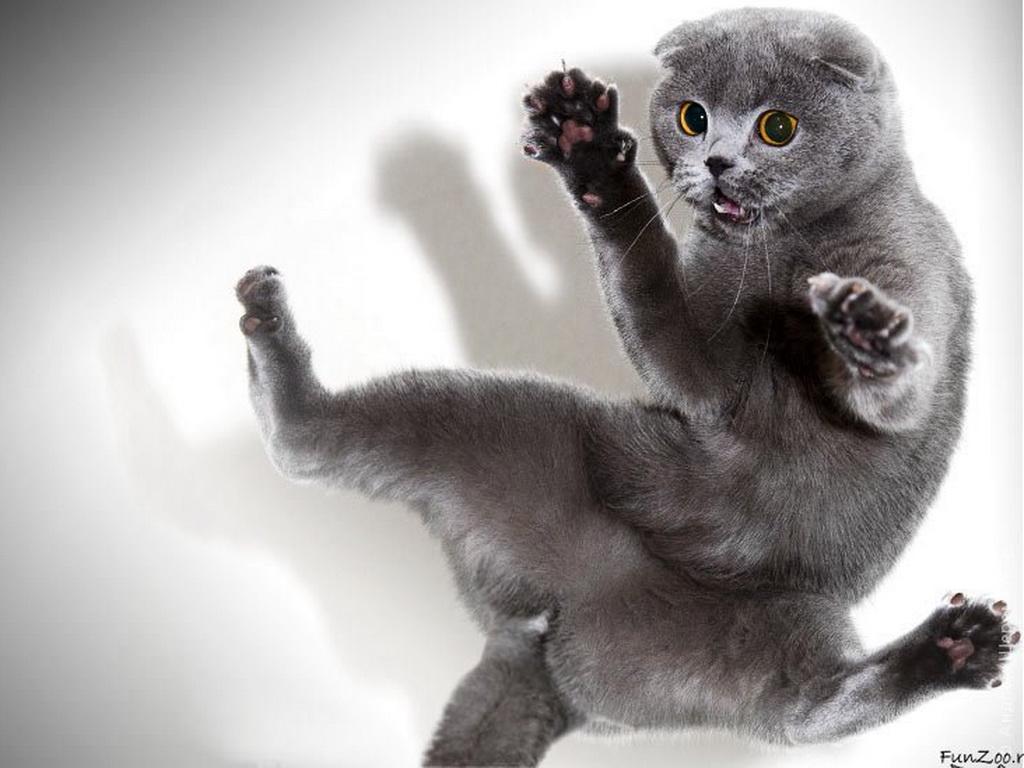 Картинки скачать бесплатно про котов