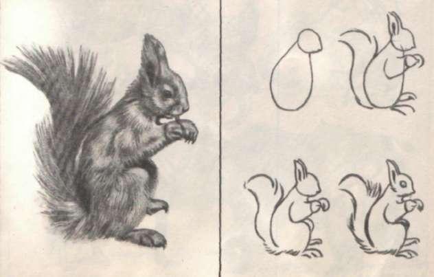 животных для рисования 5