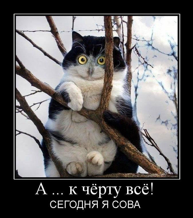 картинки про кошек с надписями смешные до слез