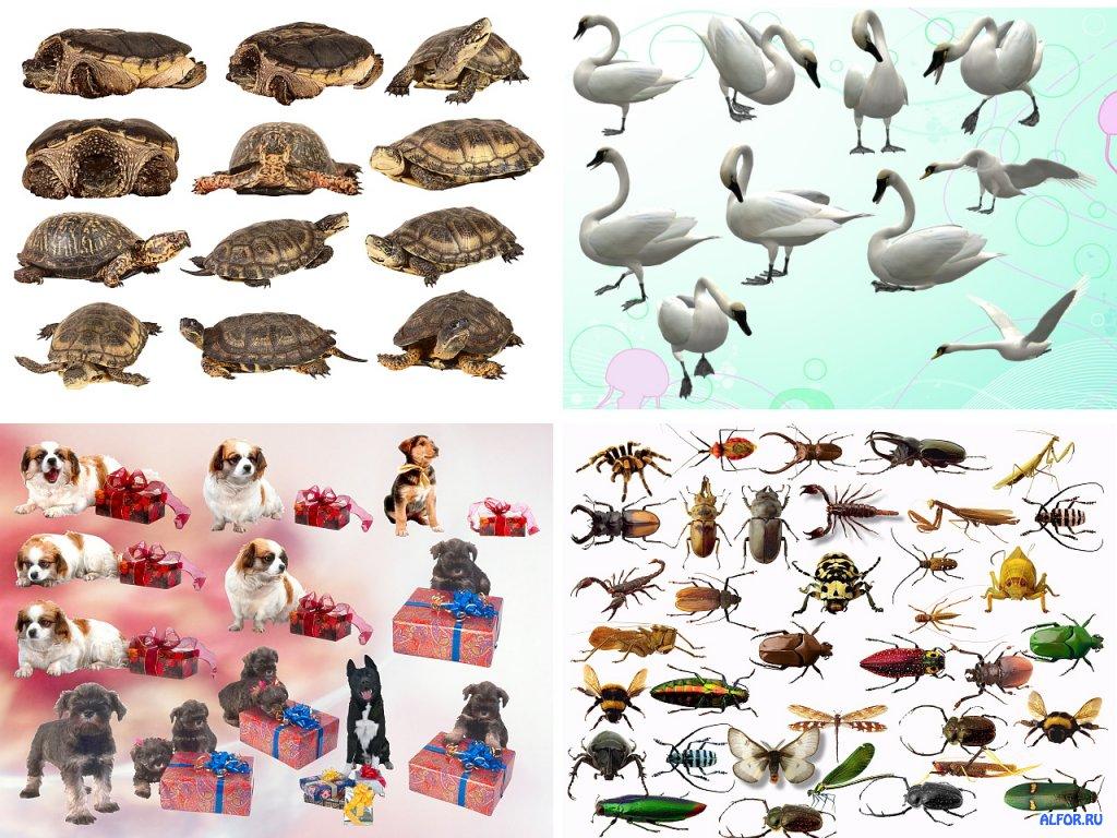 домашних насекомых с названиями