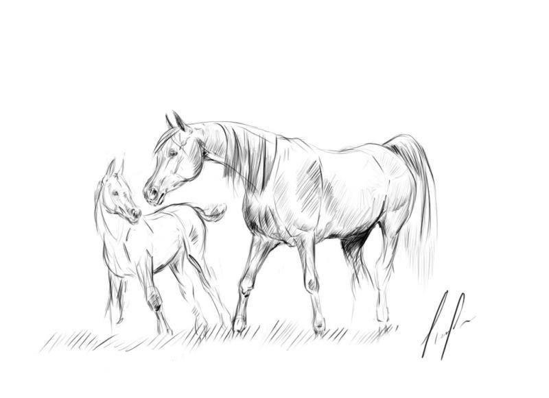 Картинки животных в природе карандашом
