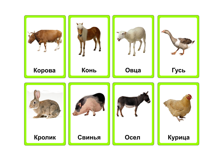 Дикие животные и их детеныши для детей картинки