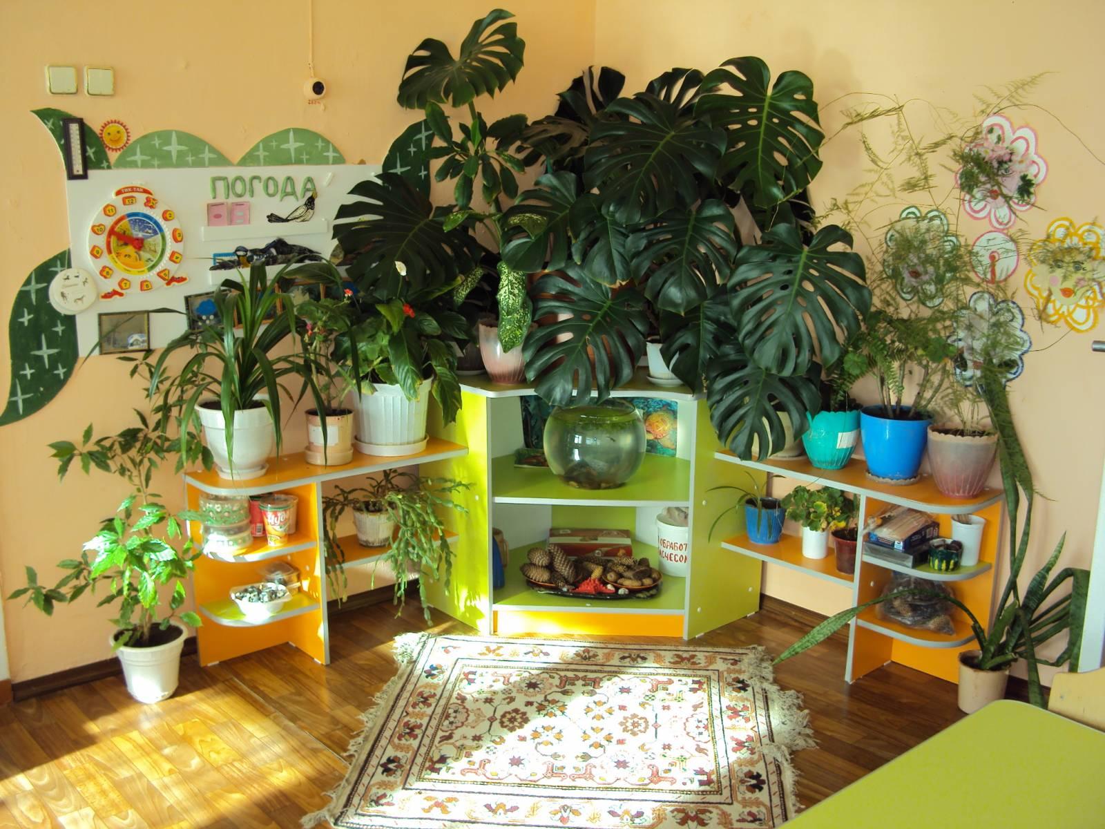 Уголки в детском саду своими руками уголки природы 80