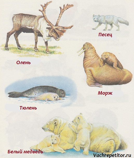 Фото про животных на аву в 10