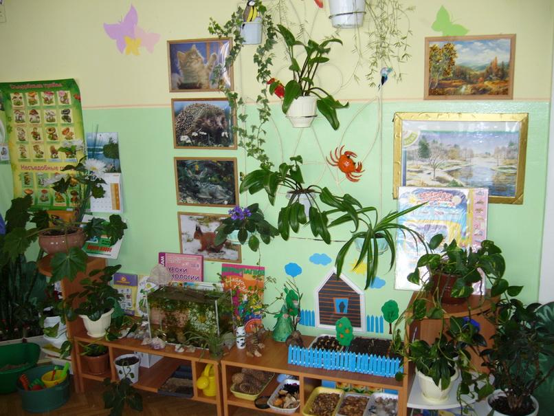 Уголки в детском саду своими руками уголки природы 16