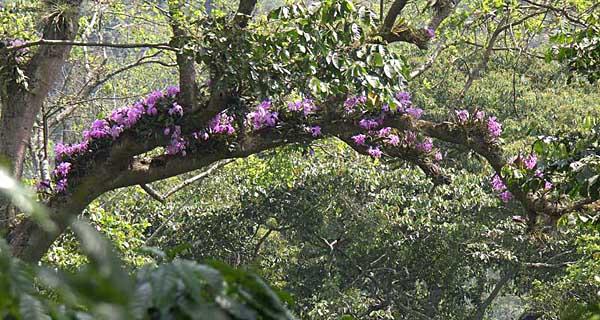 Орхідеї фото в природі фото 222-715