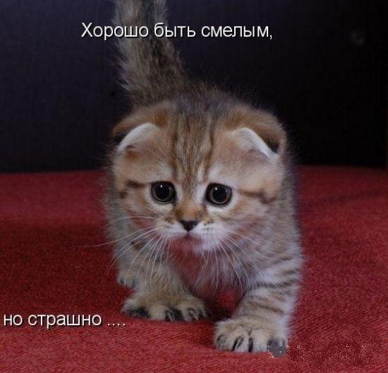 коты фото 3 дня