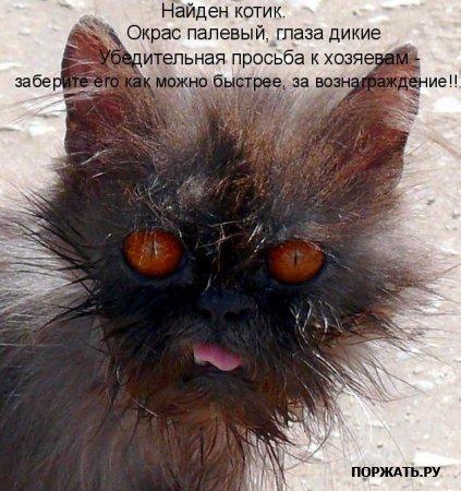 Смотреть бесплатно картинки про животных