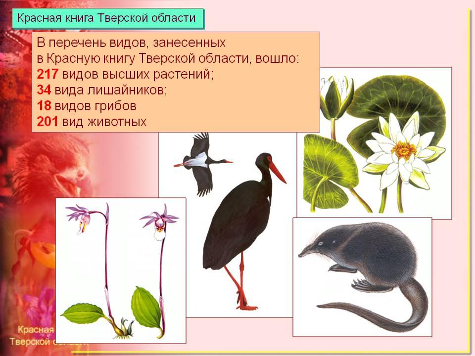 Животные занесенные в красную книгу россии и их картинки 18