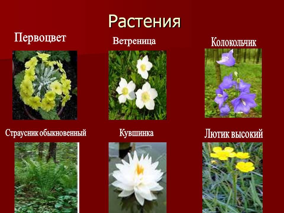 Картинки растений красной книги с названиями 14
