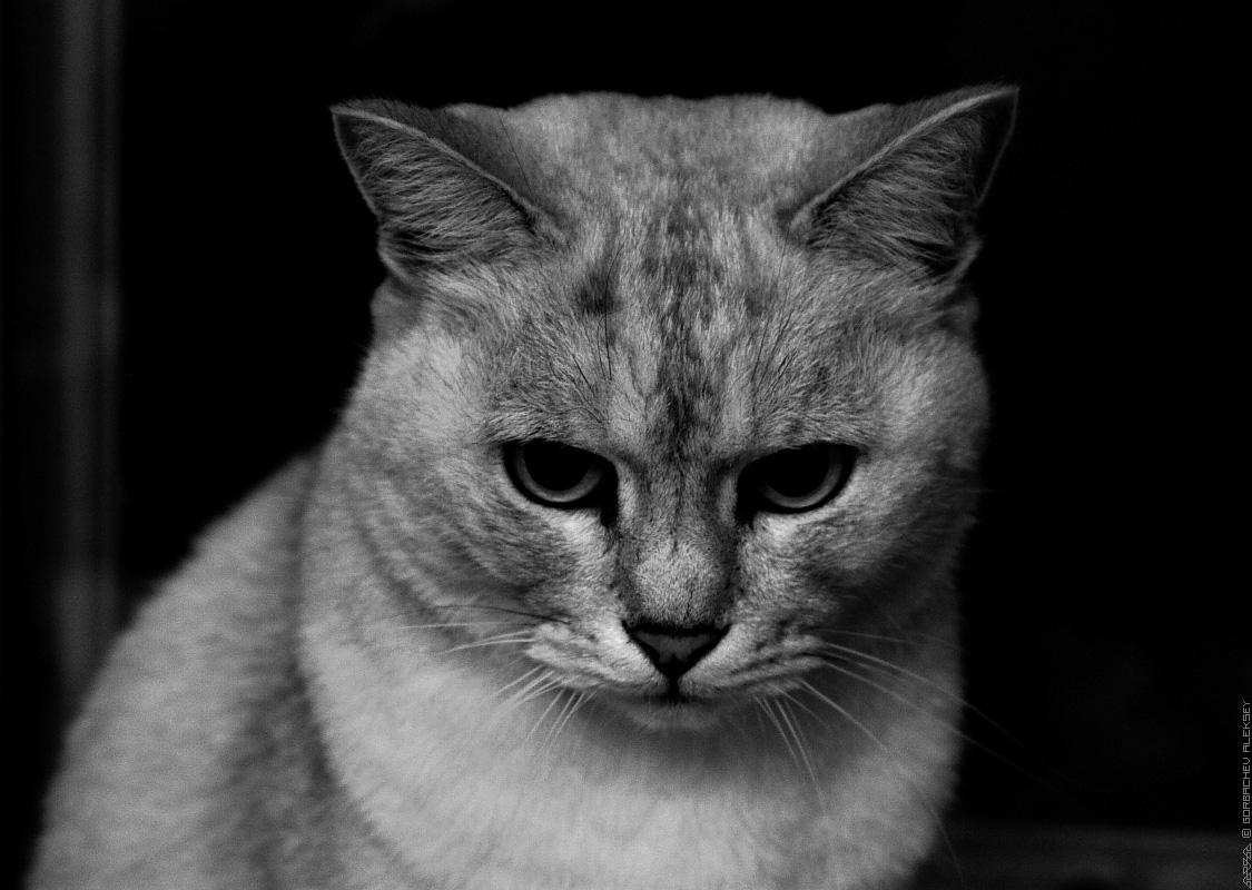 Лучшая коллекция фотографий грустные кошки