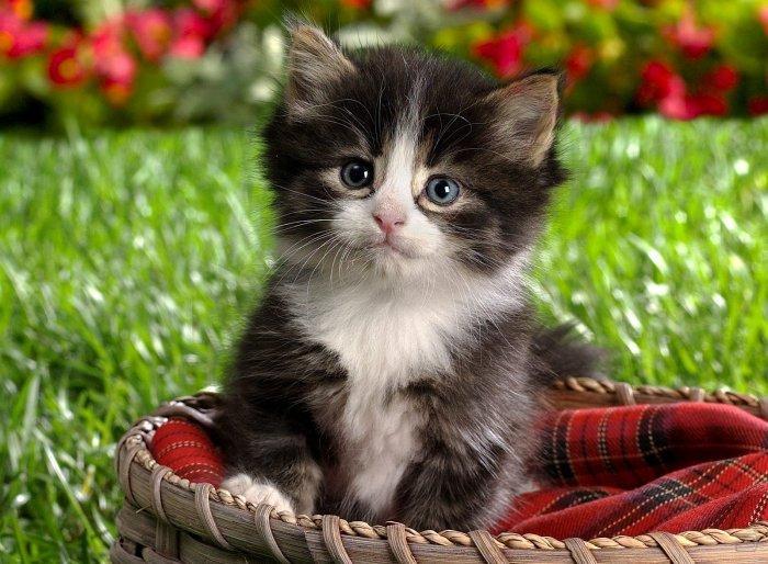 Живые картинки про кошек - 1