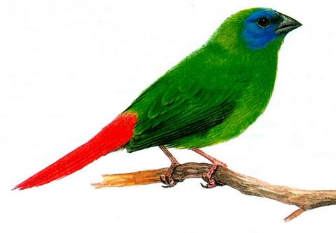 Скачать фото хищных птиц бесплатно