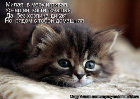 Фотки котят и щенят скачать