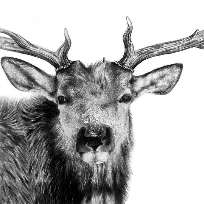 Картинки животных нарисованные карандашом » DreemPics.com ... Прикольные Нарисованные Картинки ЖиВоТнЫх