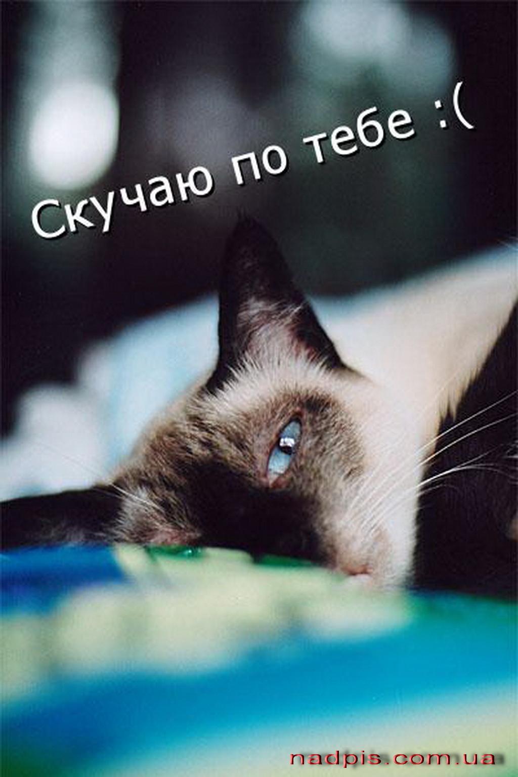 Анастасию Заворотнюк трахают во все дыры (ФОТО)