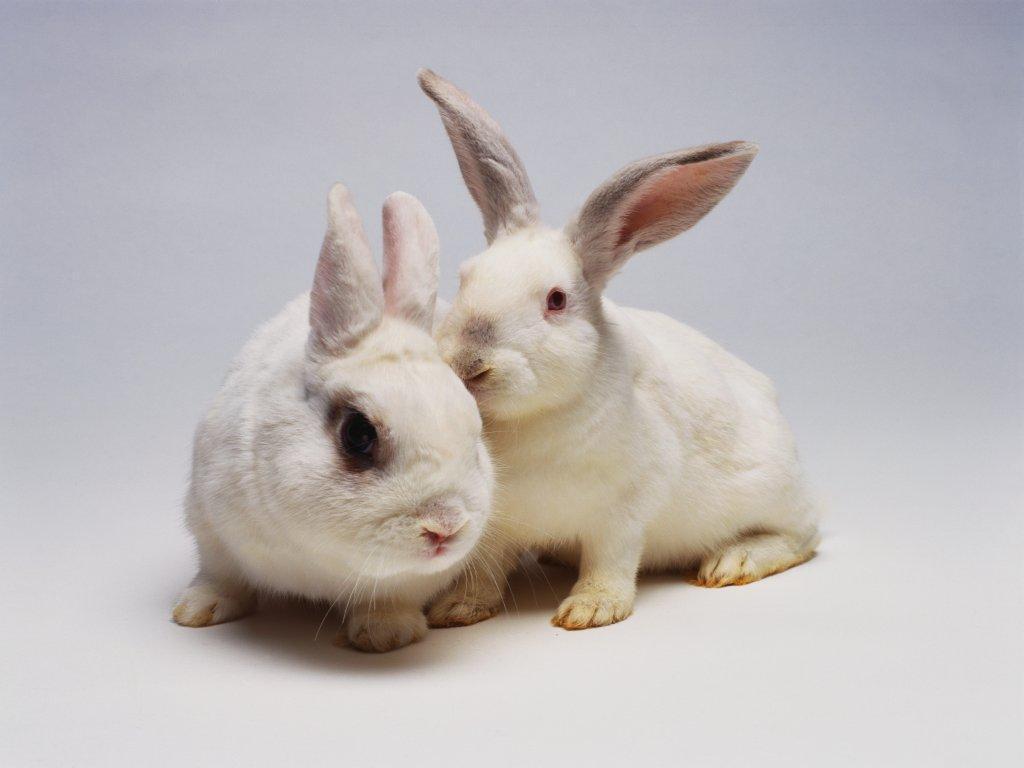 Картинки домашних животных для детей распечатать цветные - 9938