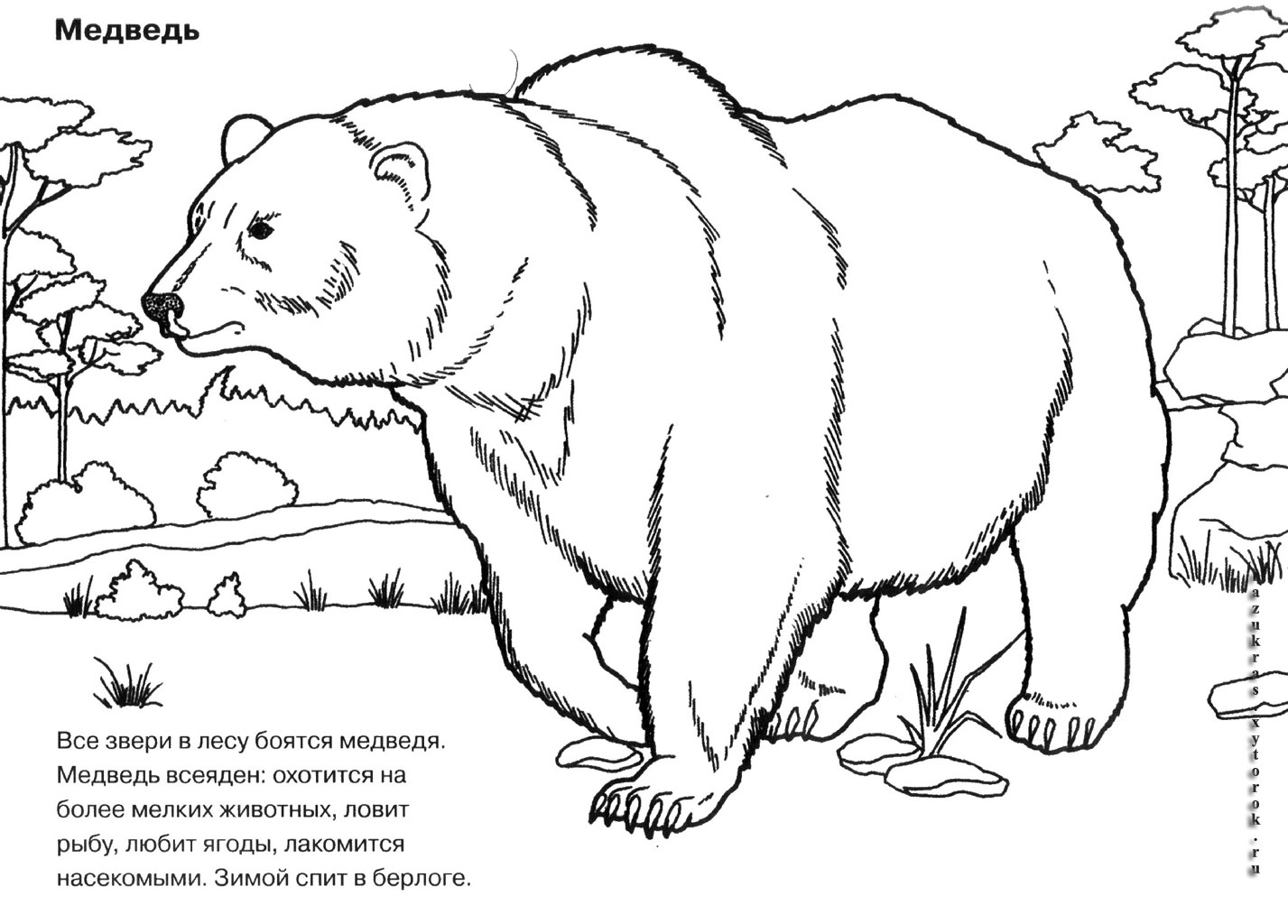 Медведь расскраска