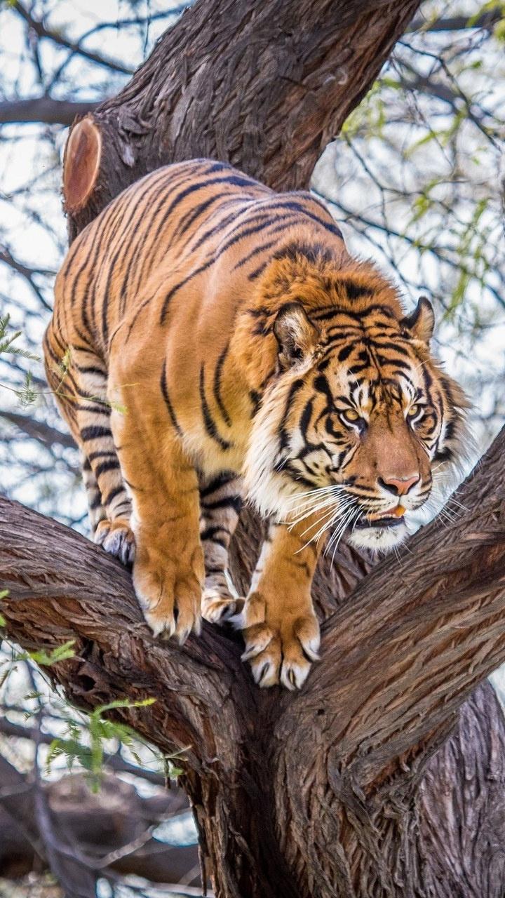 Скачать смешные картинки бесплатно про животных 14